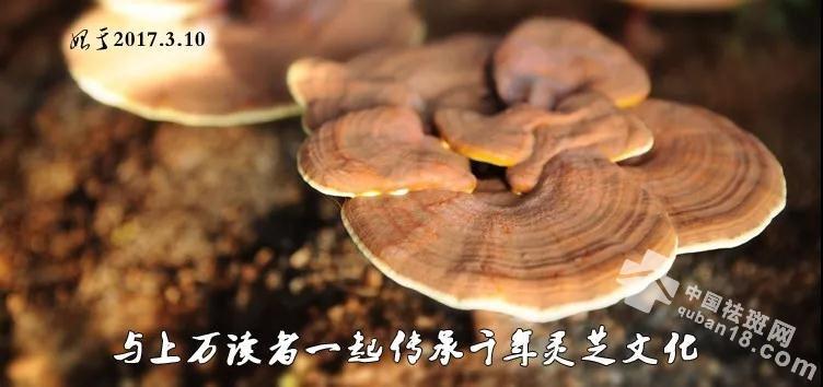 如何在5分钟内读懂<a href=http://www.quban18.com/zhongyaoquban/lingzhiquban/><a href=http://www.quban18.com/tag/lingzhi/>灵芝</a></a>!
